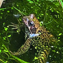 Gartenwissen @Home: Amphibien im Wandsetal