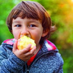 Äpfel aus dem alten Land schmecken prima