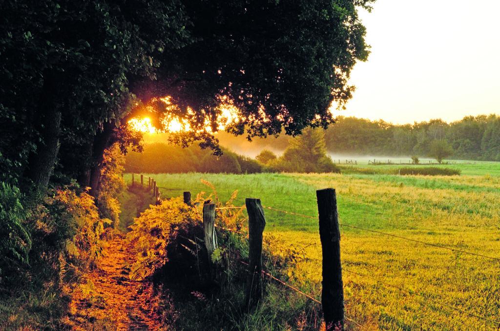 Duvenstedter Brook in der Abendsonne