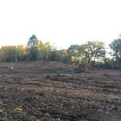 Fehlender Wald. Kahlschlag in Lemsahl-Mellingstedt