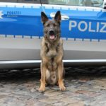 Polizeihund Balu aus Poppenbüttel