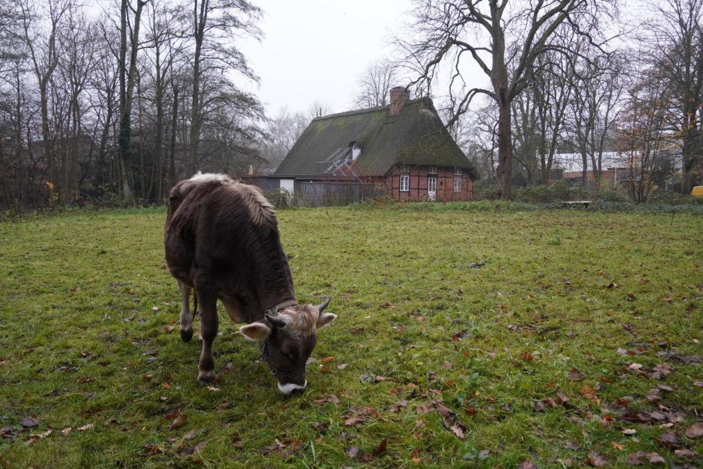 Goofy auf der Weide des Museumsdorf Volksdorf