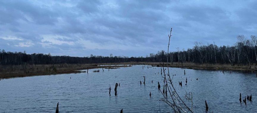 Das Naturschutzgebiet Wittmoor