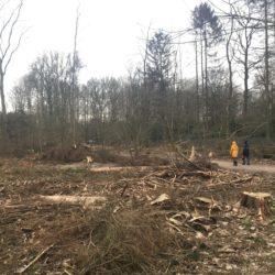 Kahlschlag im Volksdorfer Wald