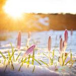 Frühling in de Walddörfern und dem Alstertal