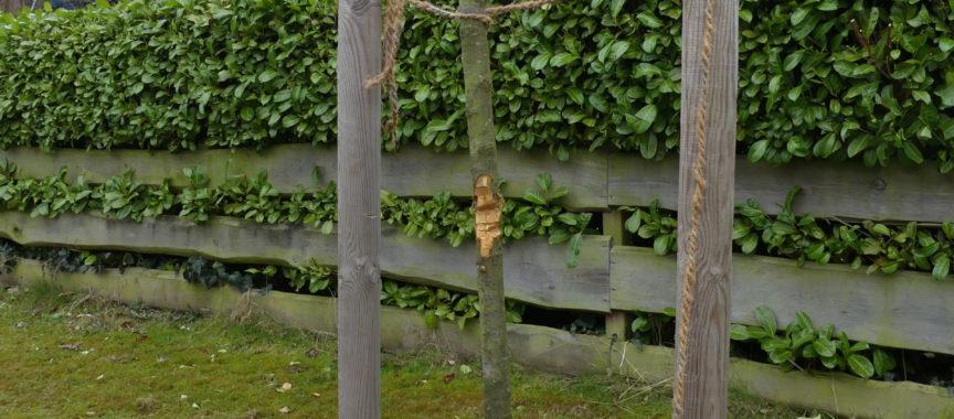 Angehackter Baum