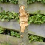 Baum mit Beil beschädigt