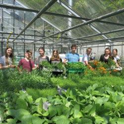 Schüler verkaufen selbstgezogene Pflanzen bei Wilde Zeiten in Volksdorf