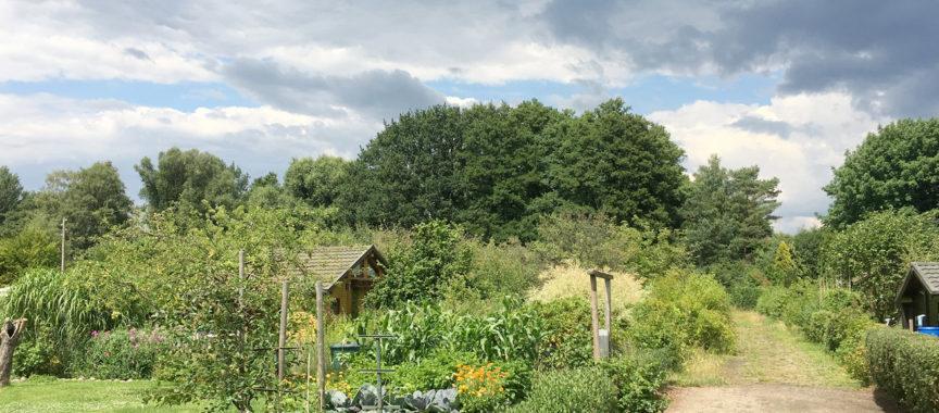 Der Kleingartenverein Diekmoor im Sommer