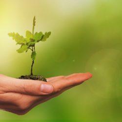 Baum_pflanzen_pixabay