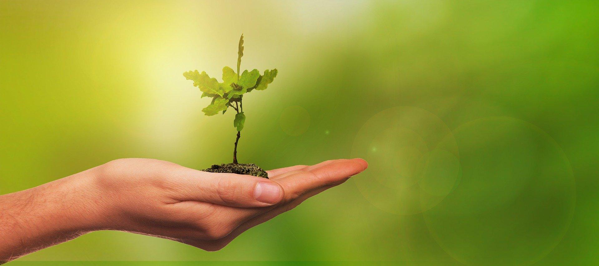 """Workshop über """"Das Liebesleben der Pflanzen"""""""