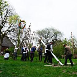 Der Maibaum im Museumsdorf Volksdorf wird aufgestellt