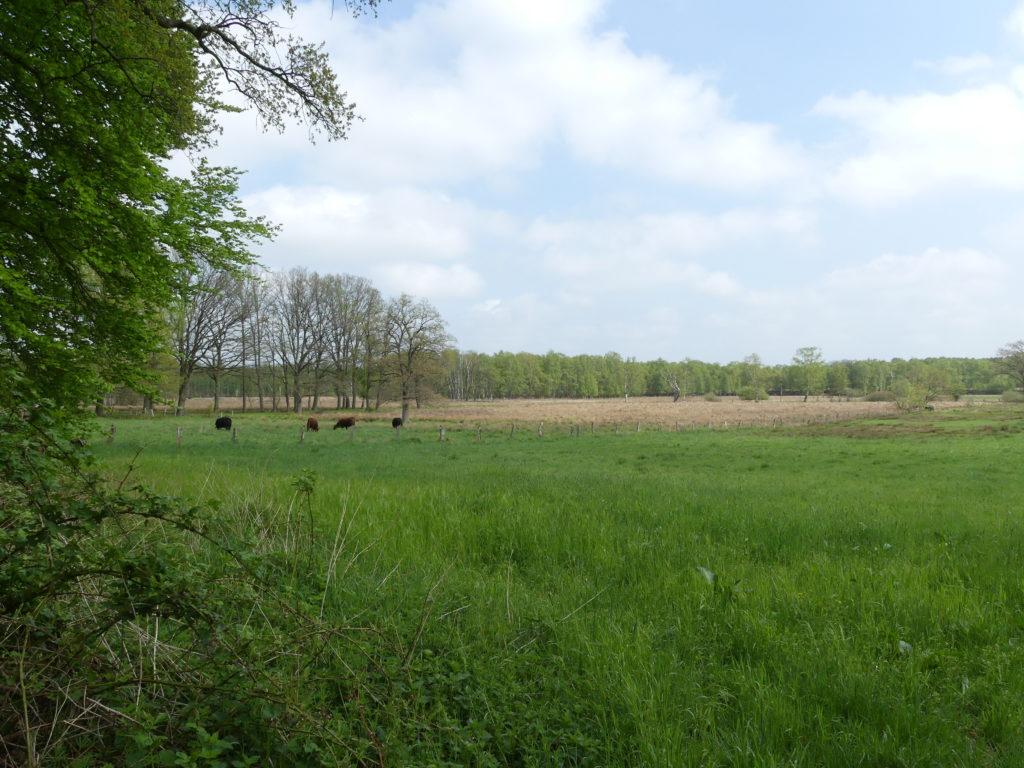 Wittmoor Wiese, Duvenstedt erleben