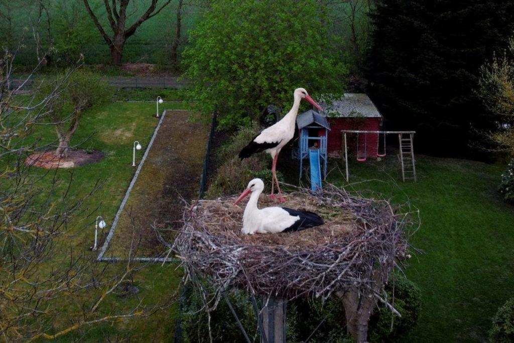 Storch im Wiemerskamp mit Frau
