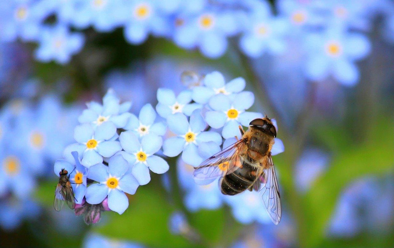 Diskussion digital Insektenschutz zum Weltbienentag