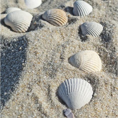 Muscheln liegen im Sand